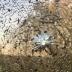 Во Львовской области обстреляли маршрутку