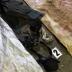 Шокирующие подробности убийства расчлененной сотрудницы СИЗО: заключенный жил без присмотра в свинарнике